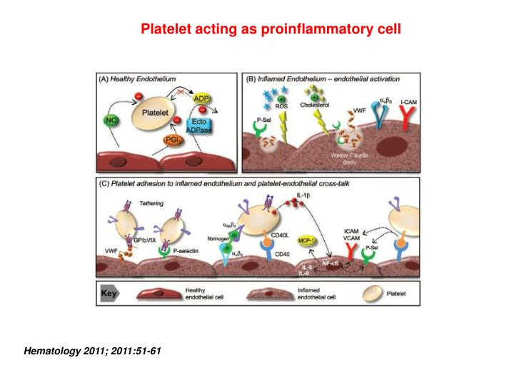 Platelet acting as proinflammatory cell