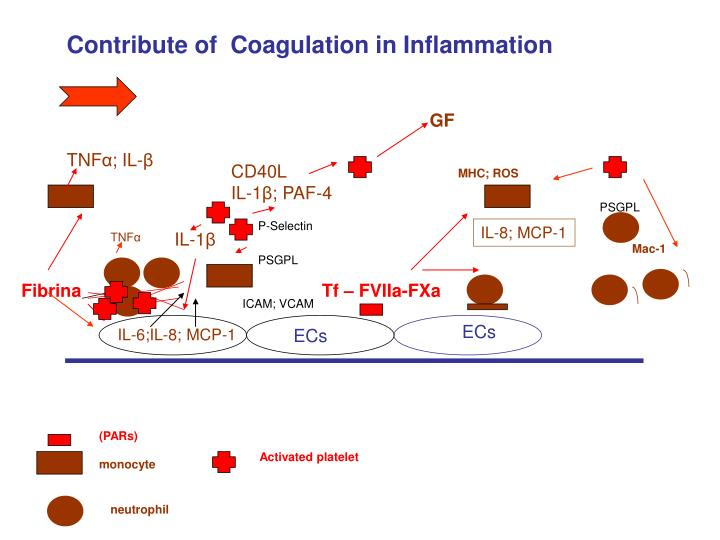 Contribute of  Coagulation in Inflammation