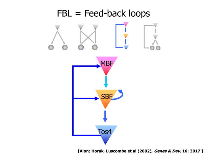 FBL = Feed-back loops