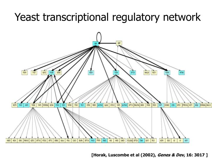 Yeast transcriptional regulatory network