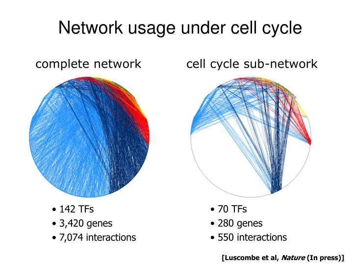 cell cycle sub-network