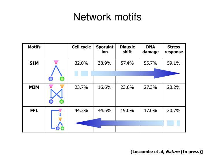 Network motifs