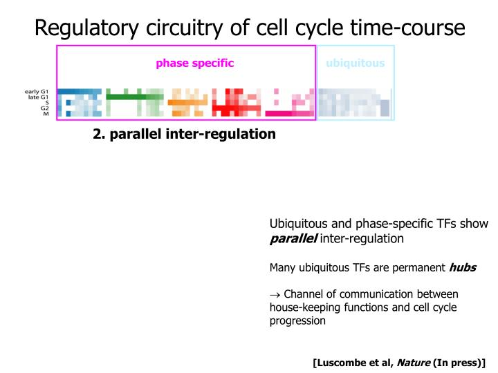 transcription factors used in cell cycle
