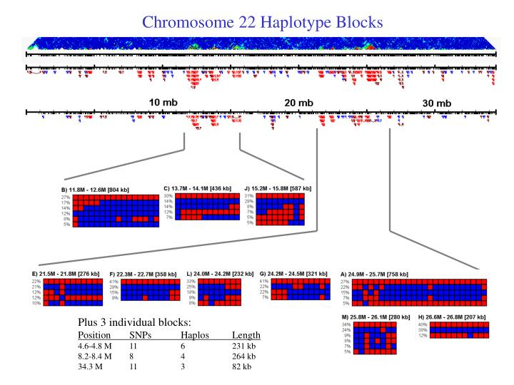 Chromosome 22 Haplotype Blocks