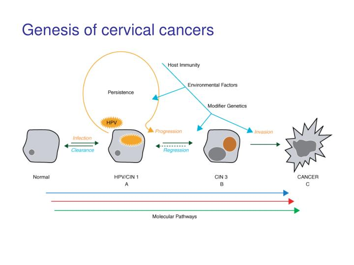 Genesis of cervical cancers