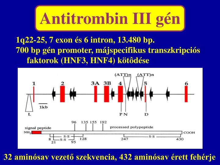 Antitrombin III gén
