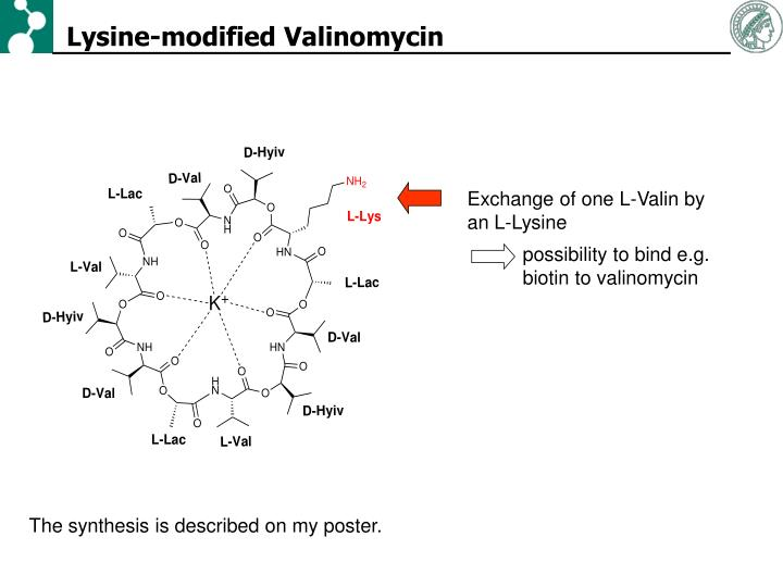 Lysine-modified Valinomycin
