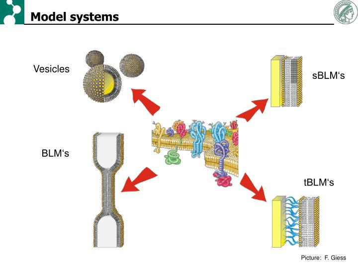 Model systems