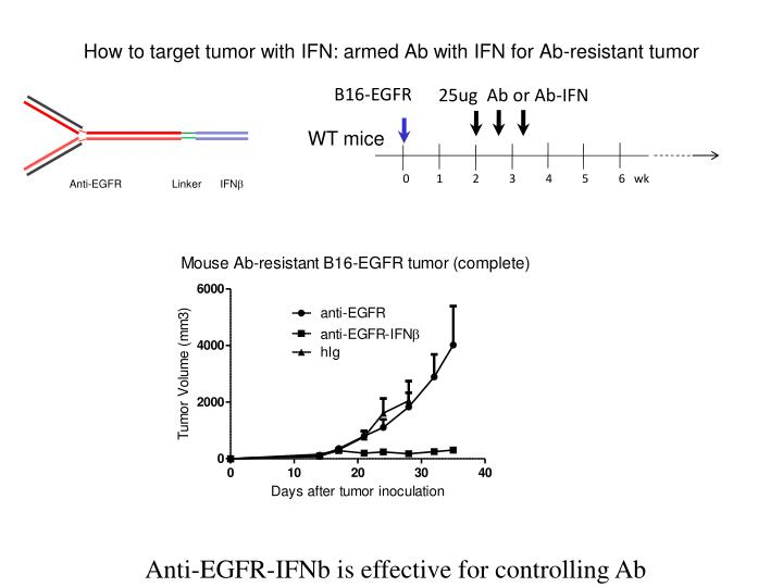 How to target tumor with IFN: armed Ab with IFN for Ab-resistant tumor