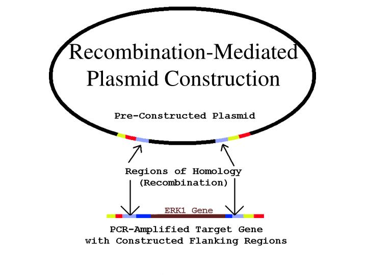 Recombination-Mediated Plasmid Construction