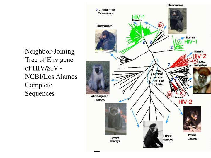 Neighbor-Joining Tree of Env gene of HIV/SIV - NCBI/Los Alamos Complete Sequences