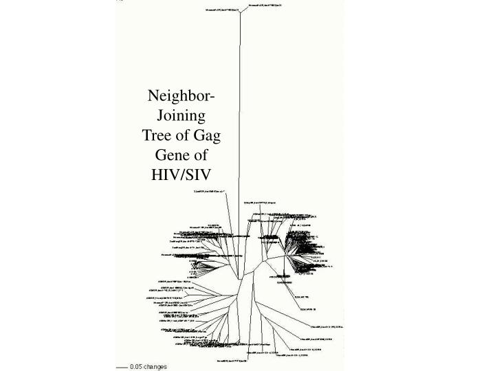Neighbor-Joining Tree of Gag Gene of HIV/SIV