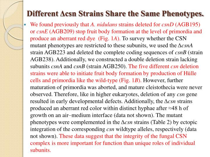 Different Δcsn Strains Share the Same Phenotypes.
