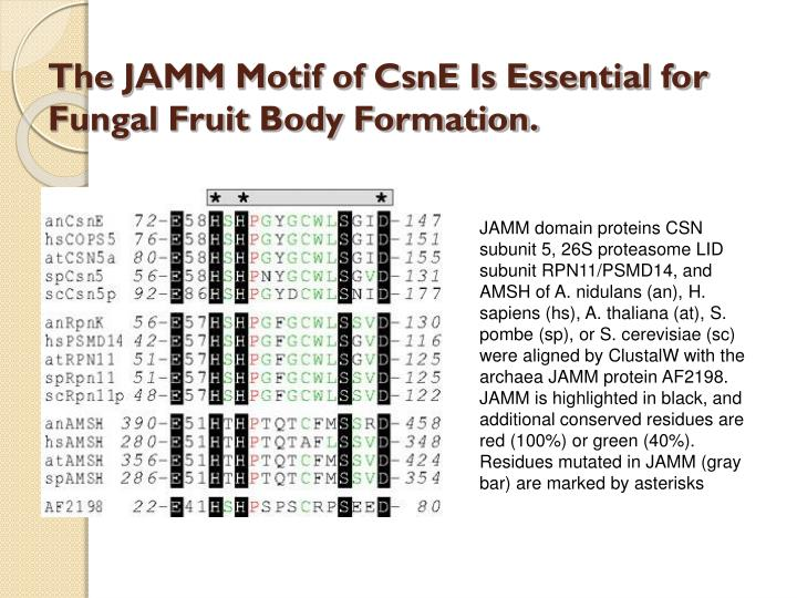 The JAMM Motif of CsnE Is Essential for Fungal Fruit Body Formation.