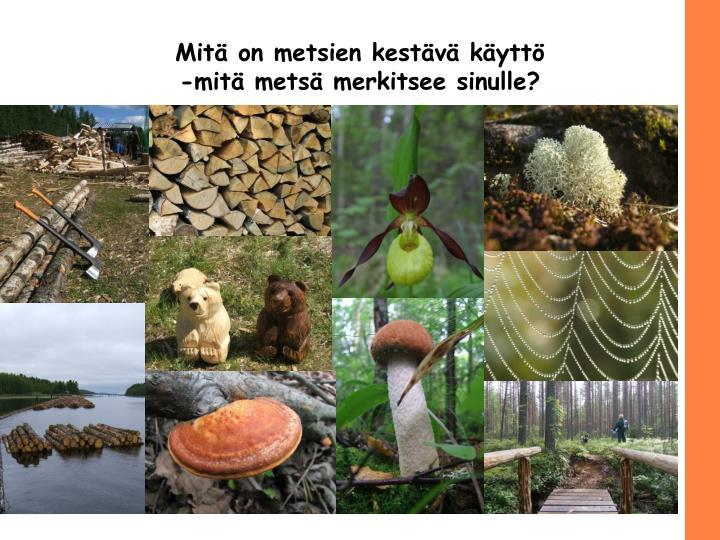 Mitä on metsien kestävä käyttö