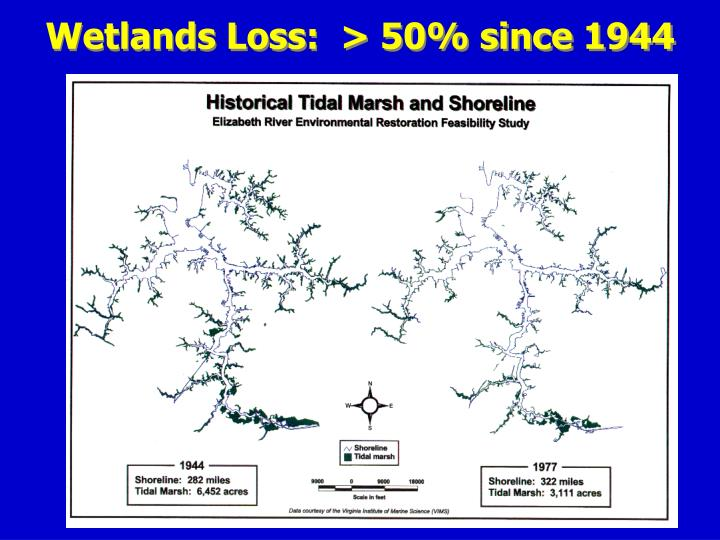 Wetlands Loss:  > 50% since 1944
