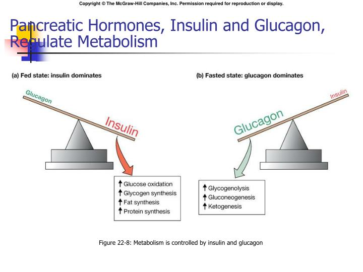 Pancreatic Hormones, Insulin and Glucagon, Regulate Metabolism