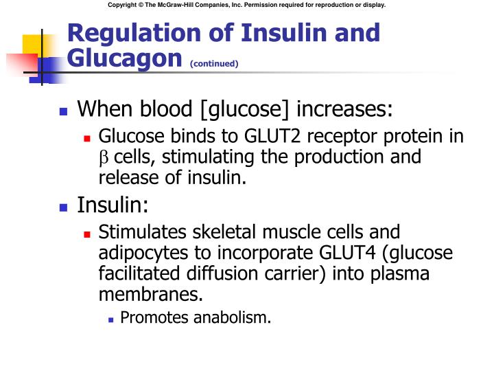 Regulation of Insulin and Glucagon