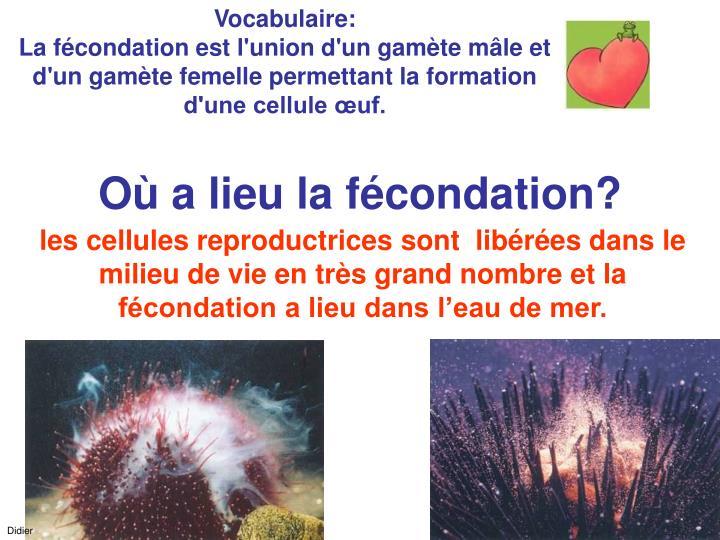 Vocabulaire: