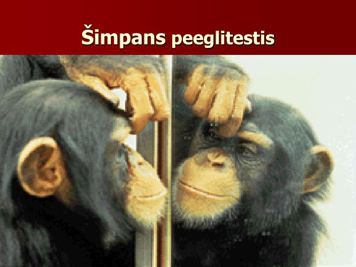 Šimpans