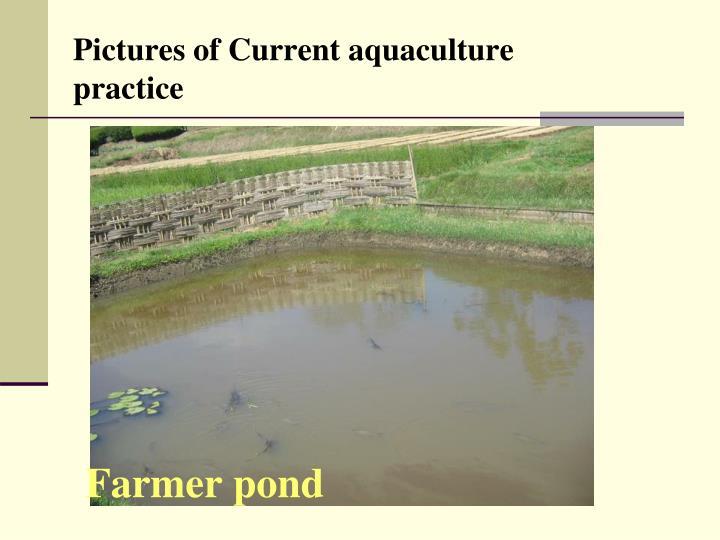 Farmer pond