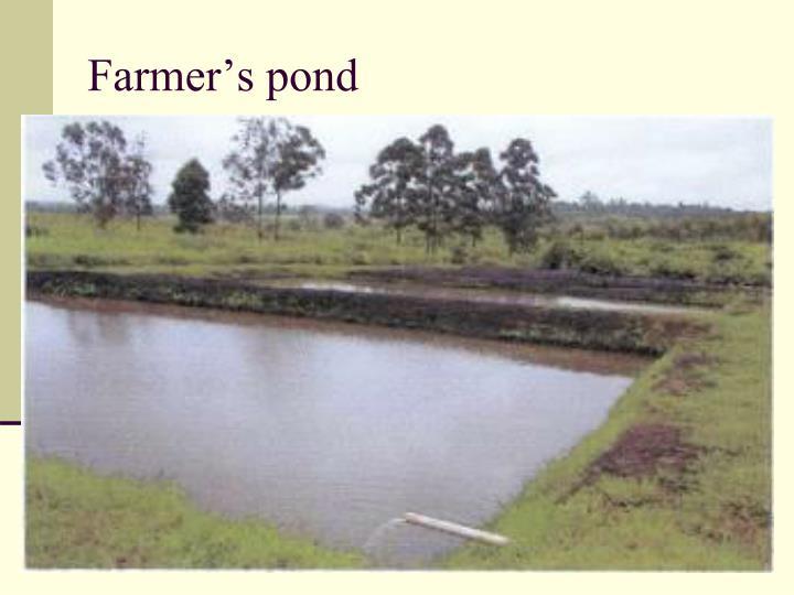 Farmer's pond
