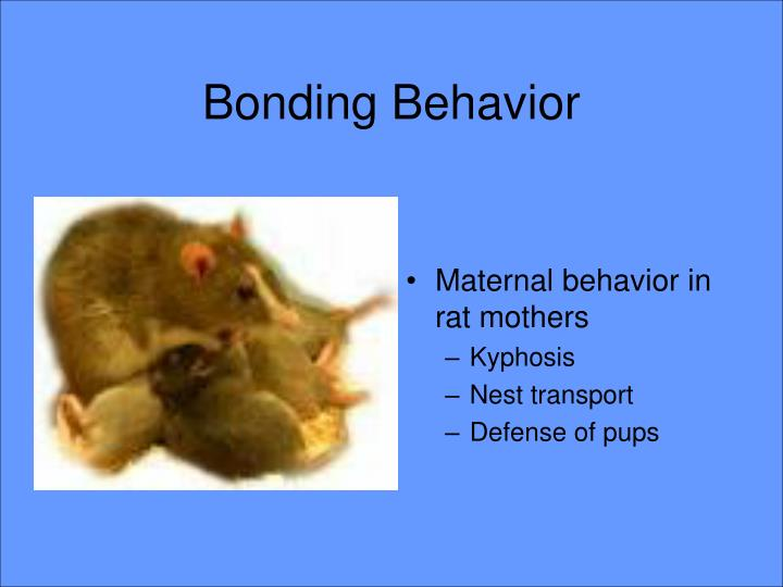 Bonding Behavior