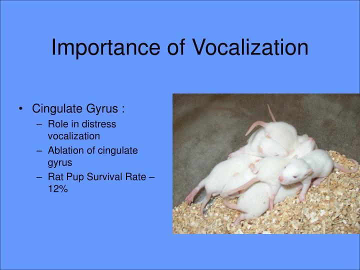 Importance of Vocalization