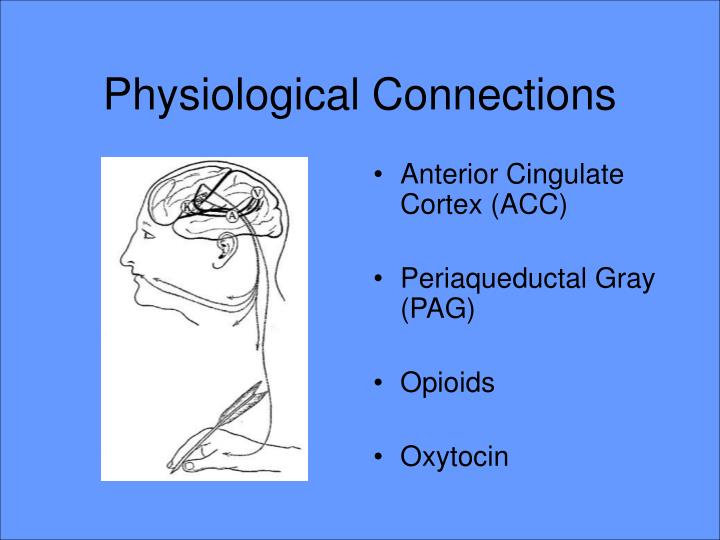Physiological Connections