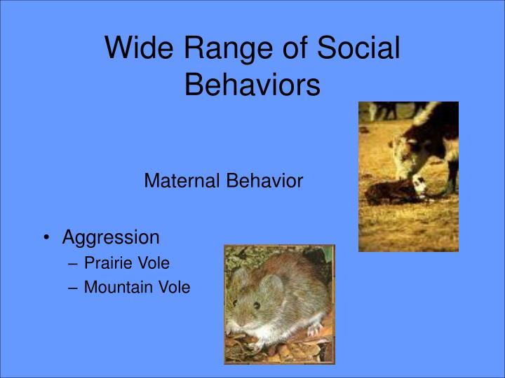 Wide Range of Social Behaviors