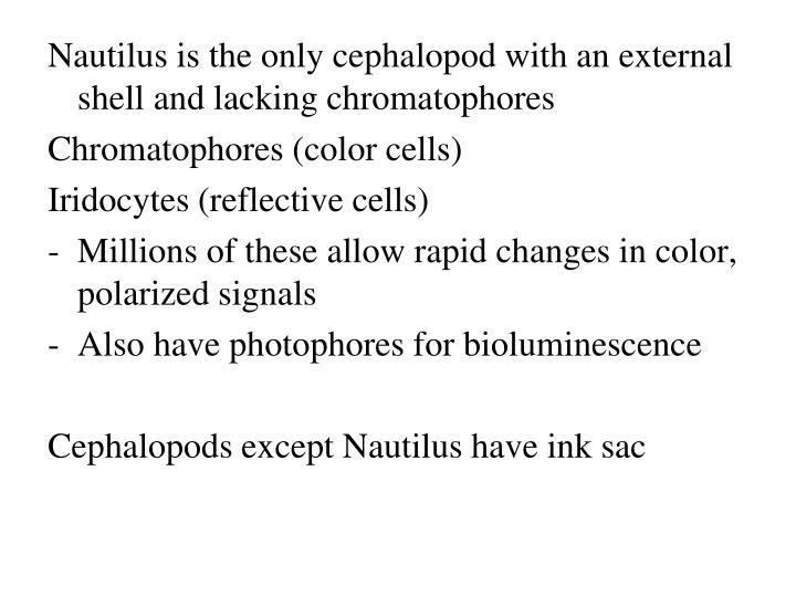 Nautilus is the only cephalopod with an external shell and lacking chromatophores