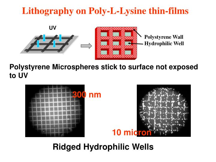 Lithography on Poly-L-Lysine thin-films