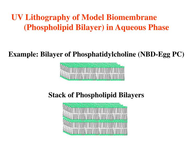UV Lithography of Model Biomembrane (Phospholipid Bilayer) in Aqueous Phase