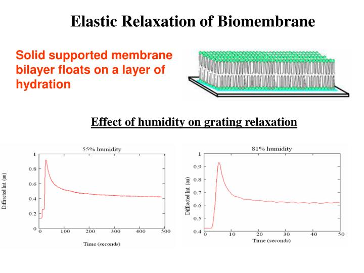 Elastic Relaxation of Biomembrane