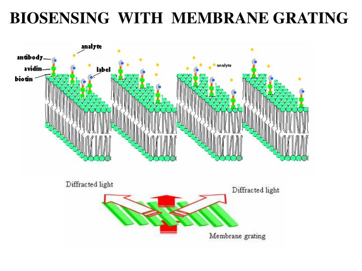 BIOSENSING  WITH  MEMBRANE GRATING