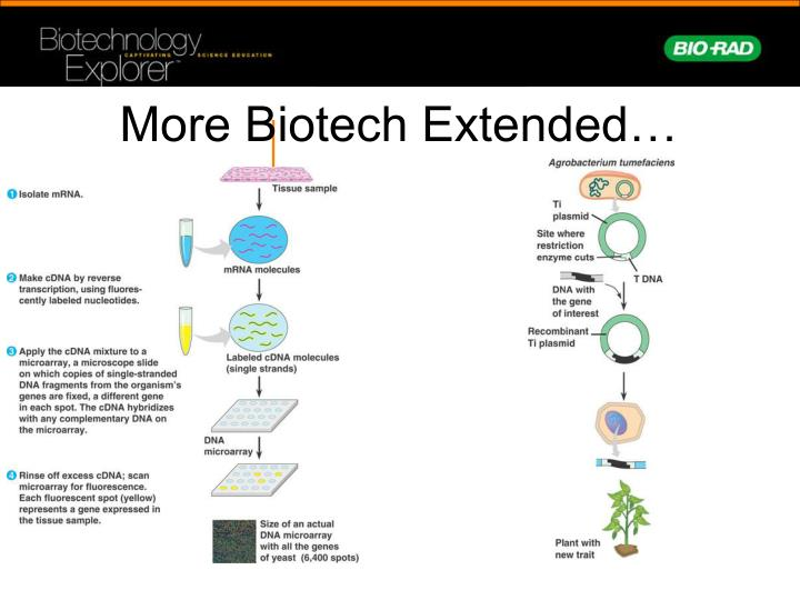 More Biotech Extended…