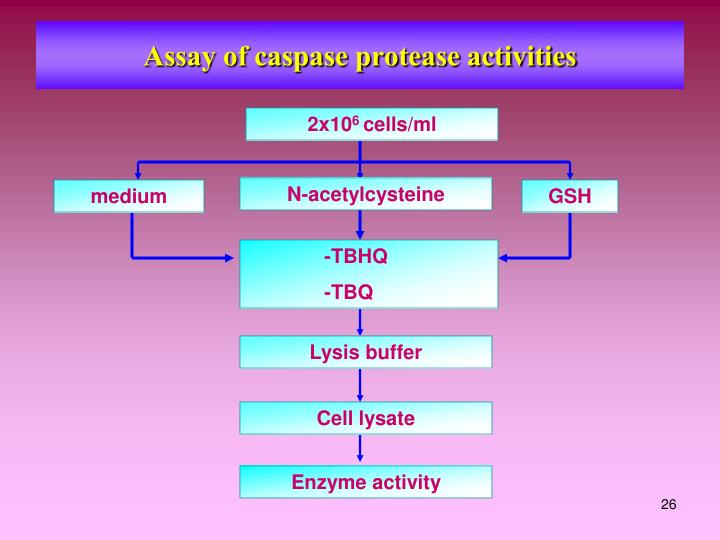 Assay of caspase protease activities