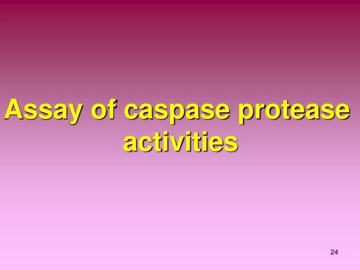 Assay of caspase protease