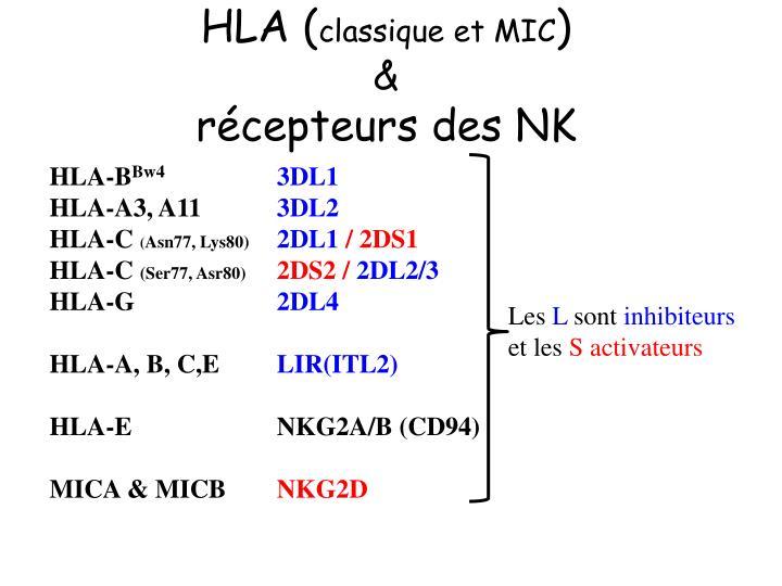 HLA (