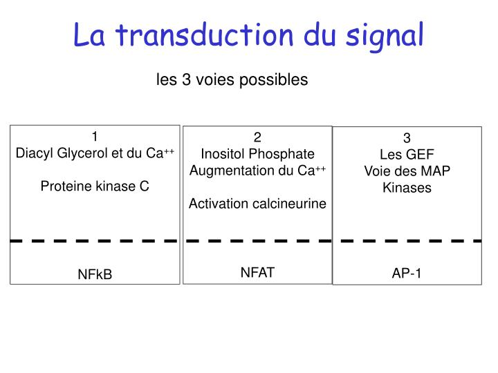 La transduction du signal