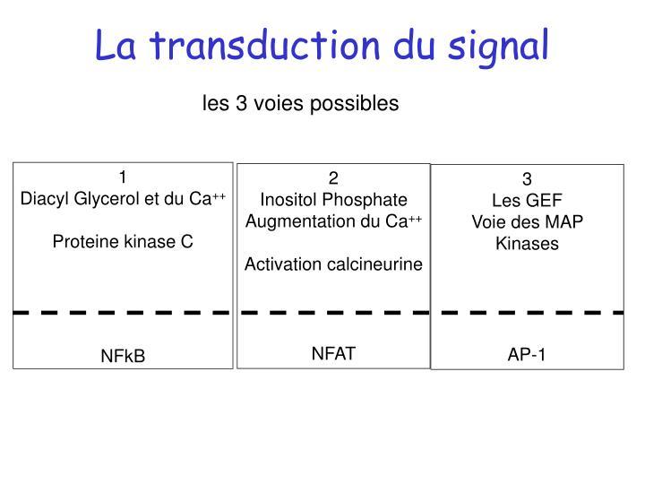 La transduction du signal