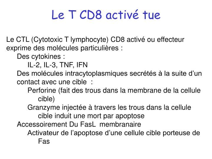 Le T CD8 activé tue