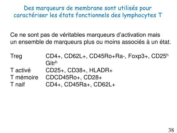 Des marqueurs de membrane sont utilisés pour caractériser les états fonctionnels des lymphocytes T