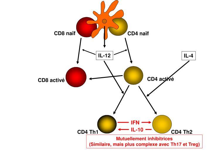 CD8 naïf