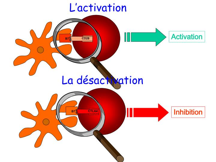 L'activation