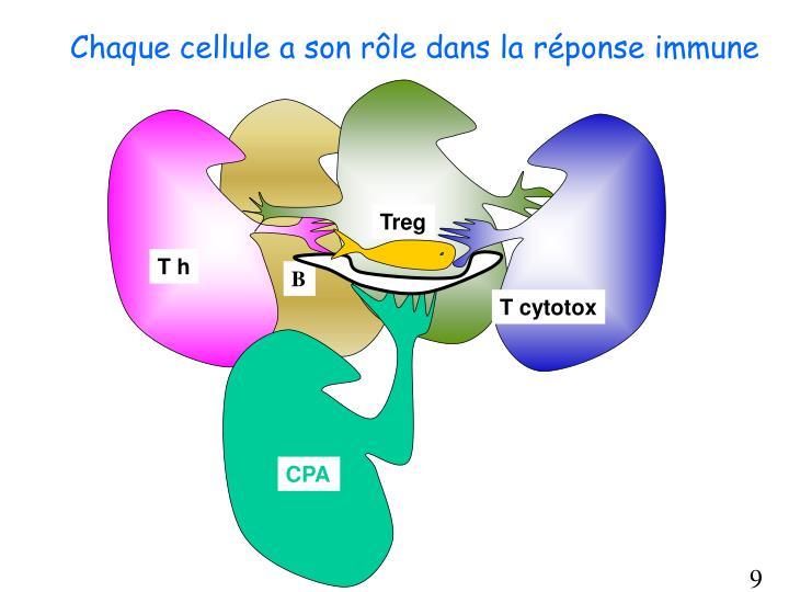 Chaque cellule a son rôle dans la réponse immune