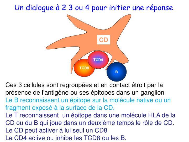 Un dialogue à 2 3 ou 4 pour initier une réponse
