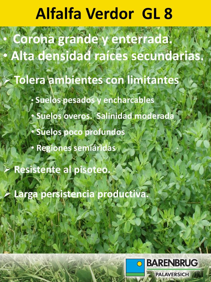 Alfalfa Verdor  GL 8