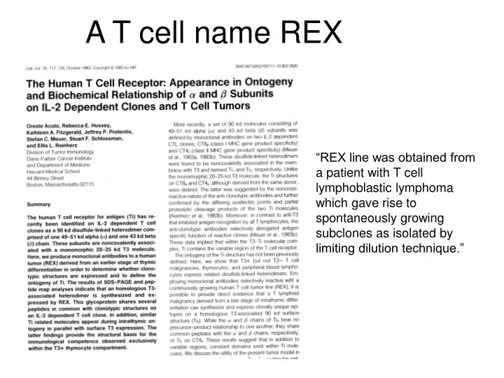 A T cell name REX
