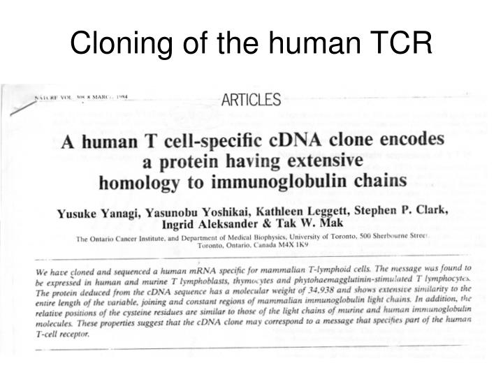 Cloning of the human TCR